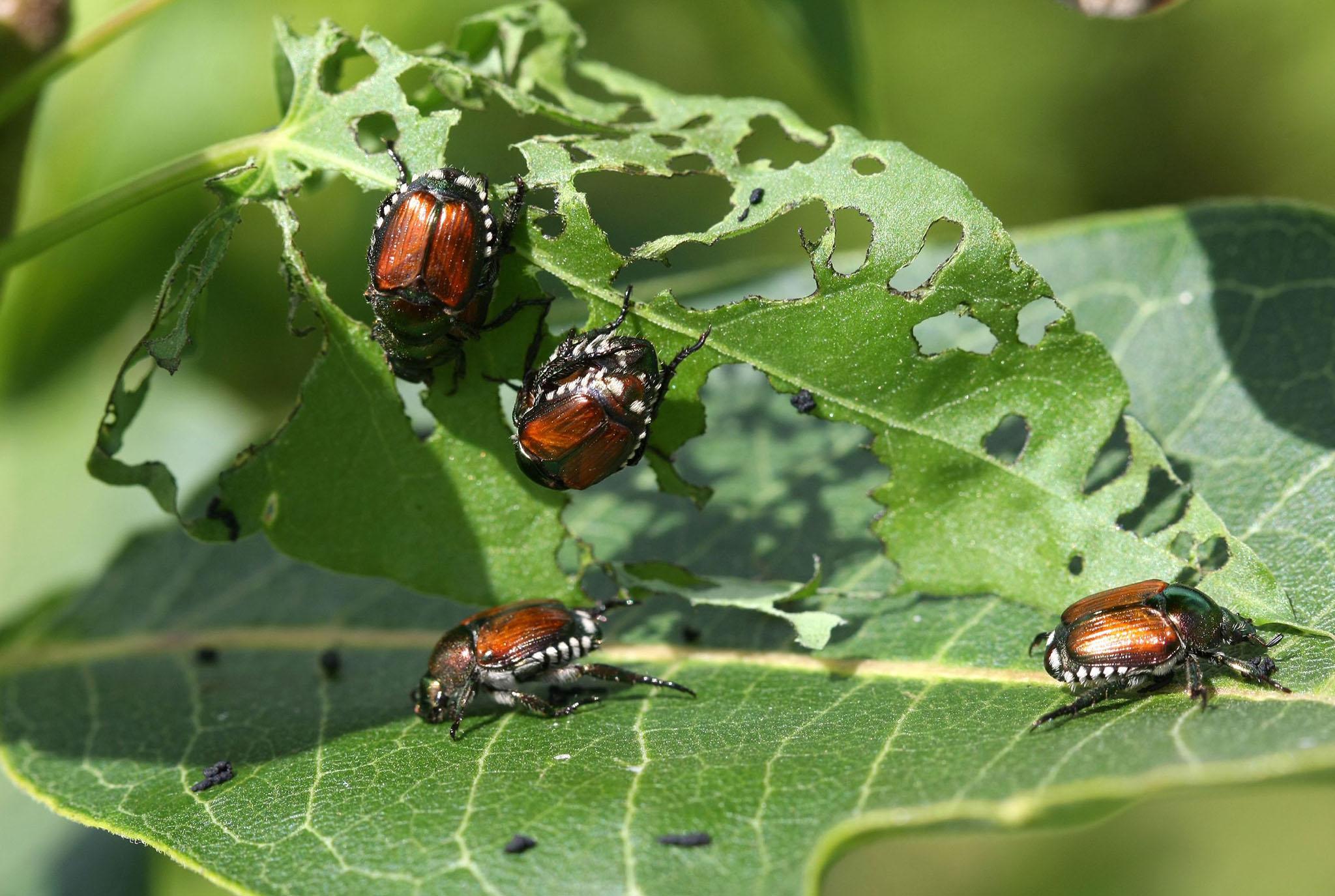Beetles Blog Post