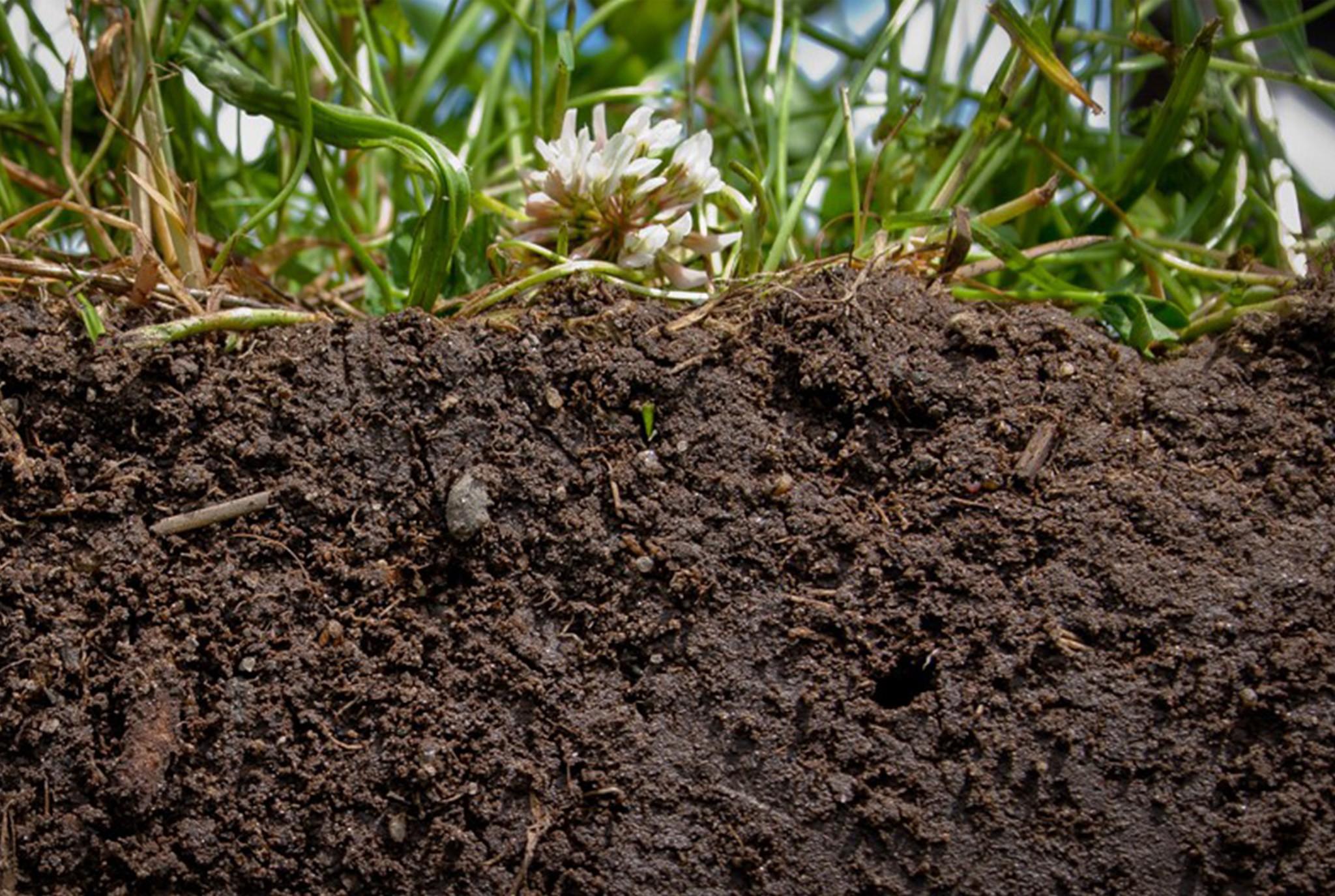 Soil is Alive Blog Post