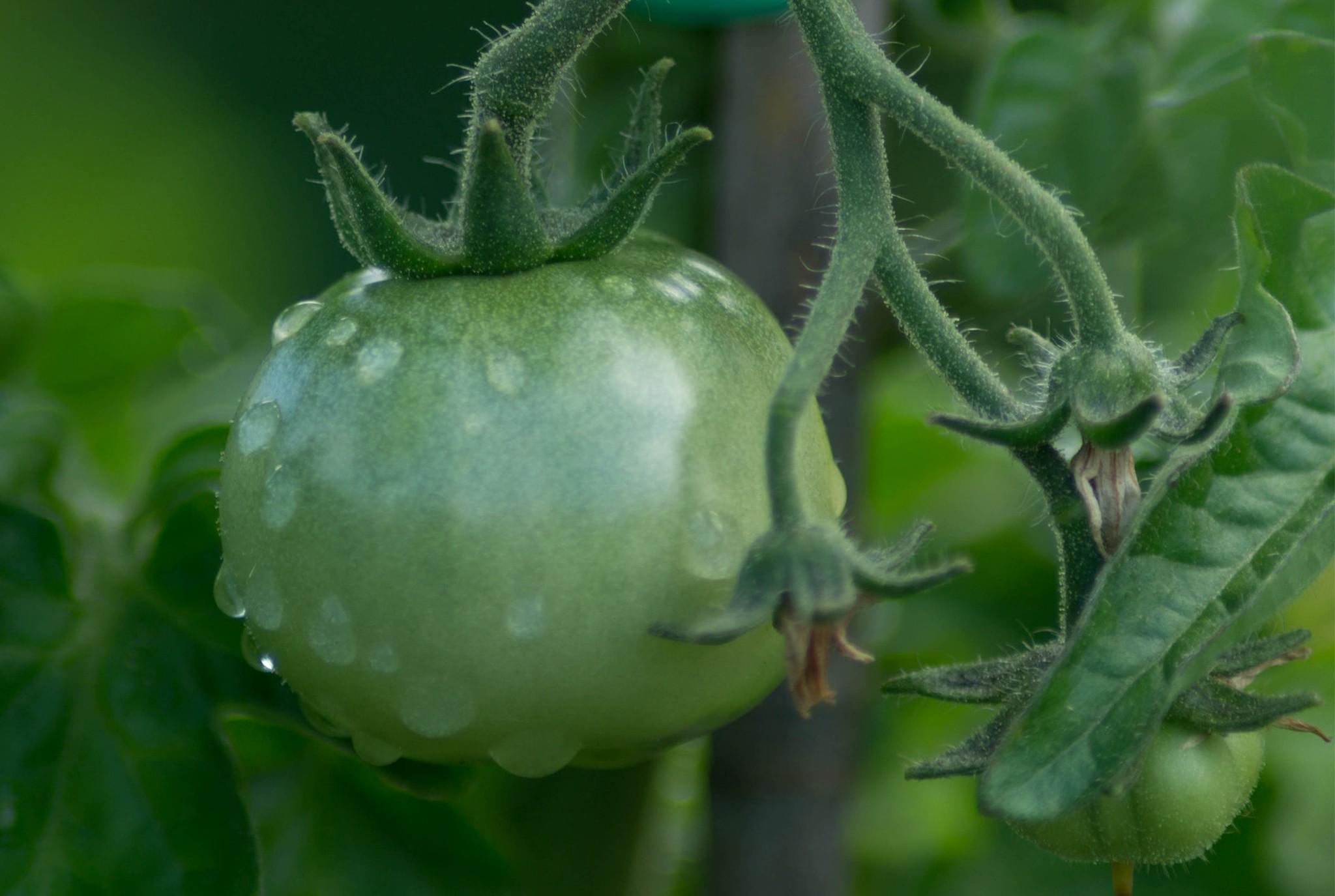 Time to Fertilize Blog Post