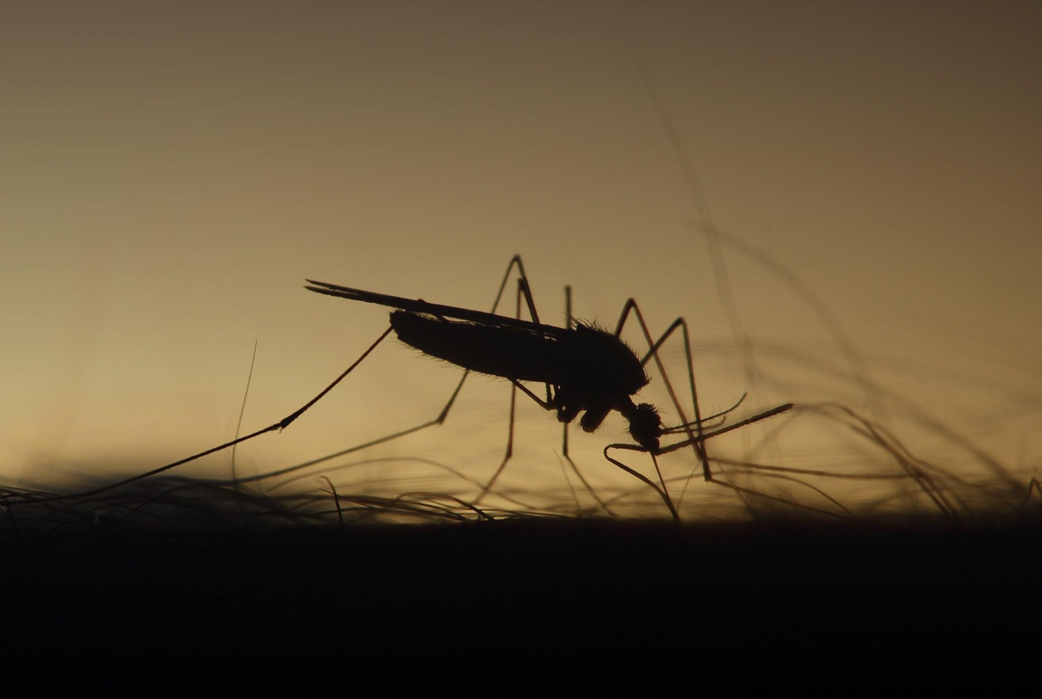 Mosquito Blog Post