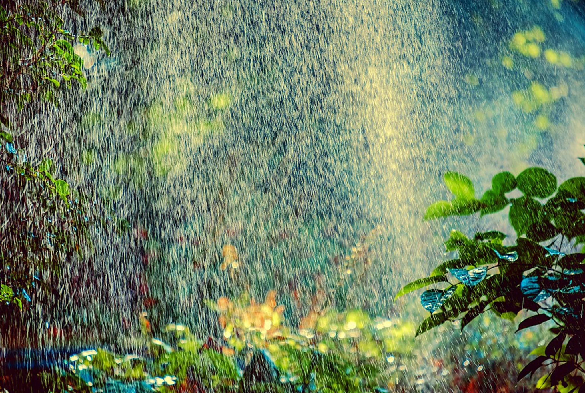 Watering Myths Blog Post