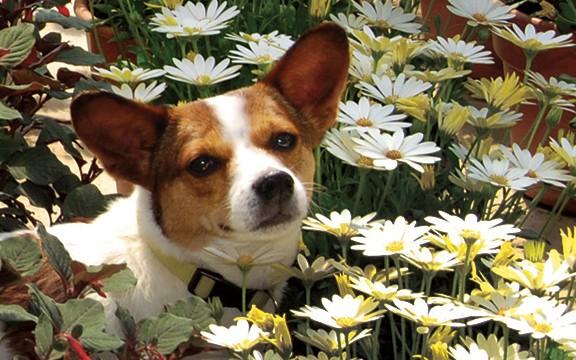 Edgar in Daisies