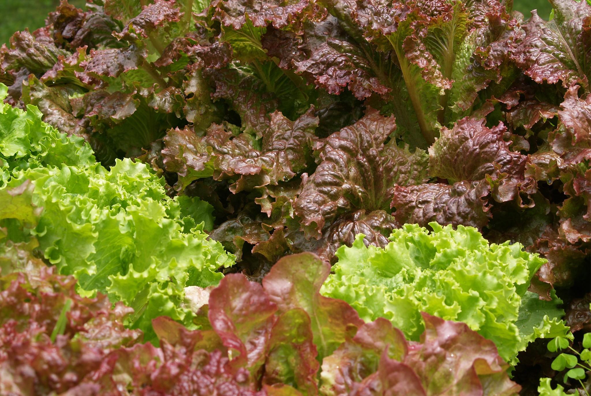 Lettuce Blog Post