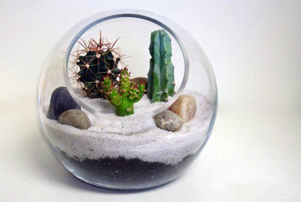 Desert Terrarium Workshop