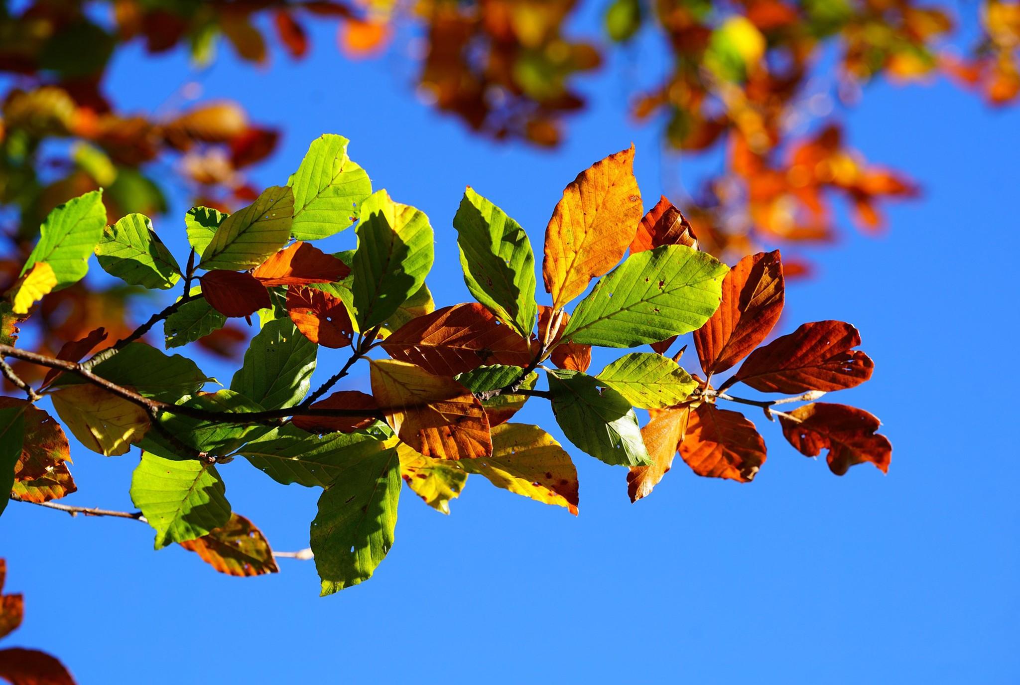 Fall Planting Blog Post