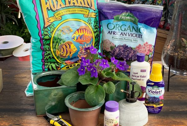 African Violet Potting Workshop