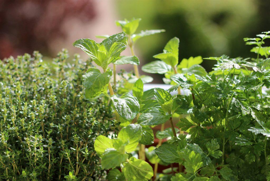 Summertime Herbs_WEB_JUN2020