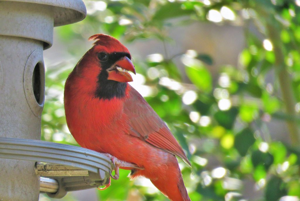 For-the-Birds-Blog-Image_JULY2020