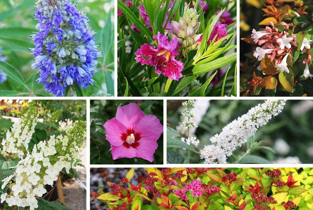 Summer-Blooming-Blog-Post-Image_JULY2020