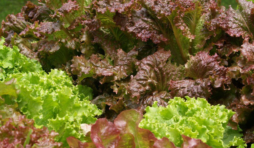 Plant-Veggies-Now_WEB_AUG2020