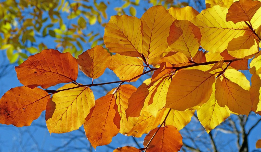 Is it Autumn or Fall_WEB_SEPT2020