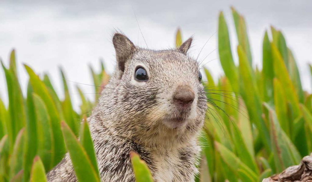 Scram-Squirrels_WEB_NOV2020