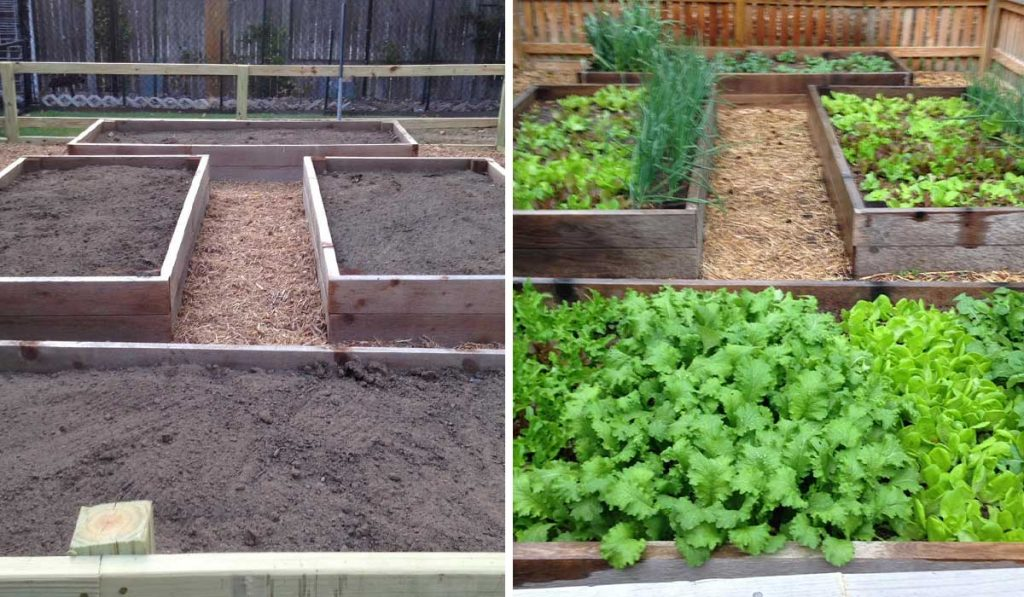 Raised-Bed-Gardening_WEB_FEB2021