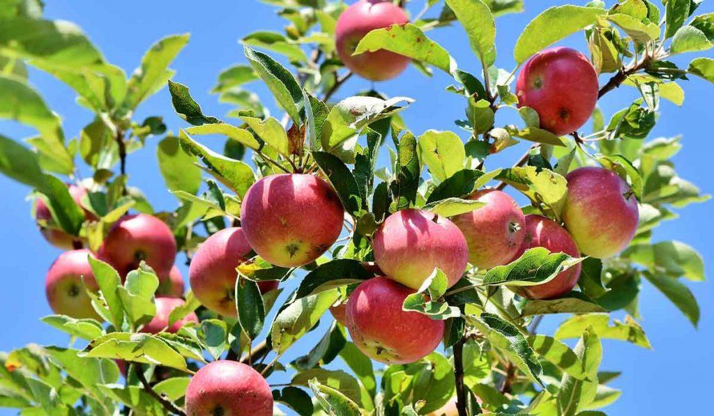 fruit-for-all-BLOG-JAN2021-v3