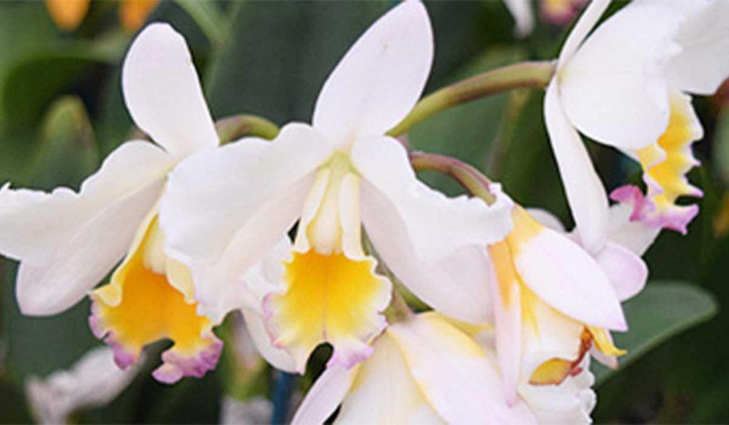 Orchid-Orchidaceous_WEB_MAR2021_v2