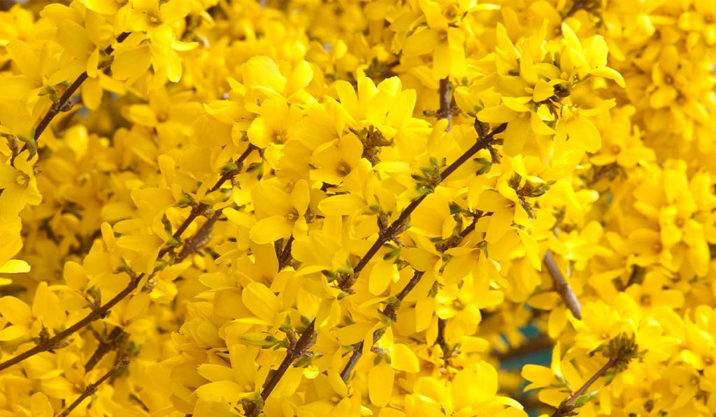 Time-to-Fertilize-Folks_WEB_MAR2021