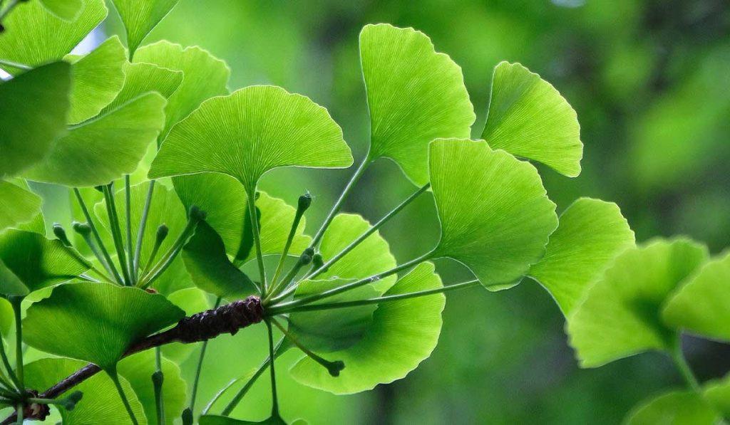 Sun-Loving-Shade-Trees_WEB_APR2021