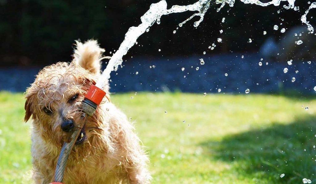 Dog-Days-Summer_WEB_JULY2021