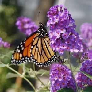 Pollinator Magnets