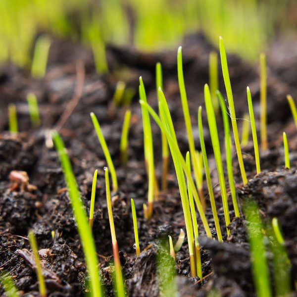 Grass Seed Category