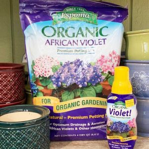 African Violets Care