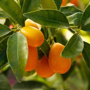 Citrus & Tropical Fruits